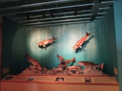 22 sept USA Waterlife Museum (4)